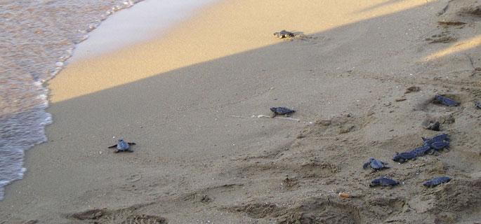 Turtles Kyrenia